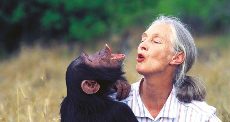 Front Cover. Dr Jane Goodall with orphan chimpanzee Uruhara at the Sweetwaters Sanctuary in Kenya