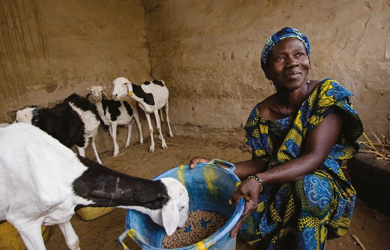 Feature picture Making change for good A female farmer from the village of Diarrere in Senegal who has received three sheep from Heifer International, Photo by Geoff Bugbee